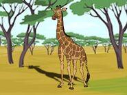 Rileys Adventures Rhodesian Giraffe