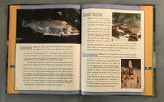 Scholastic Encyclopedia Of Animals (44)