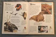 The Kingfisher First Animal Encyclopedia (72)