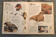The Kingfisher First Animal Encyclopedia (72)