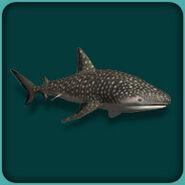 Whale shark (Blue Fang)