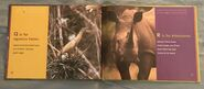 African Animals ABC (9)