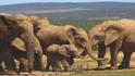 Babyelephant teletubbies