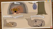 Bears Bats Ground Squirrels Groundhogs