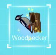 IMG dc woodpecker