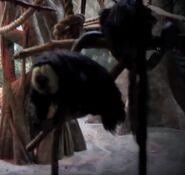 Pale headed saki in denver zoo