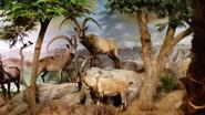 Rolling Hills Zoo Ibexes