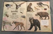 A Curious Collection Of Animals Animals (29)