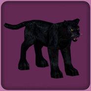 Black Leopard (Blue Fang)