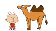 Stanley Griff meets Domestic Bactrian Camel