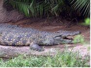 DAK Crocodile (V2)
