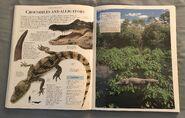 DK Encyclopedia Of Animals (65)