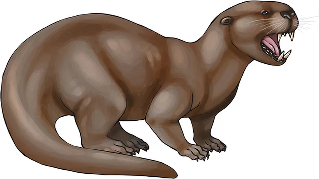 Enhydriodon