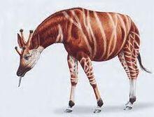 Giraffokeryx.jpg