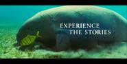 Oceans Dugong