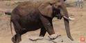 Okland Zoo Elephant