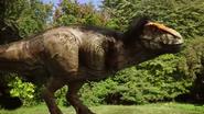 Real Tyrannosaurus