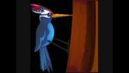 Safari Island Woodpecker