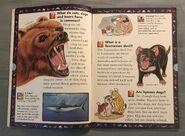 Wild Cats and Other Dangerous Predators (1)