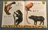 Endangered Animals Dictionary (22)