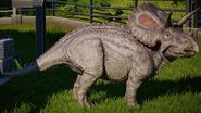 JWE Torosaurus