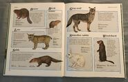 Macmillan Animal Encyclopedia for Children (5)