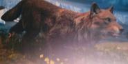 Toledo Zoo Dire Wolf