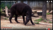 What Butterflies and Elephants Have In Common with Tapirs