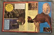 Wild Creatures (Eyes On Nature) (4)