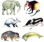 Elephants Hyraxes Aardvarks Armadillos