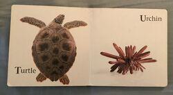 James Balog's Animals A to Z (11).jpeg