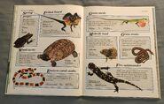 Macmillan Animal Encyclopedia for Children (12)