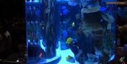Rainforest Café Fish