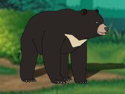 Rileys Adventures Formosan Black Bear.jpg