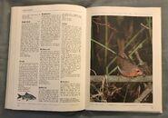 The Kingfisher Illustrated Encyclopedia of Animals (133)