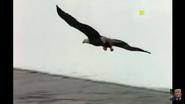 UTAUC Eagle