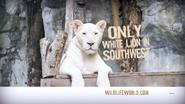 WWLZ&AQ Lioness