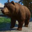 Bear, Himalayan Brown (Planet Zoo)