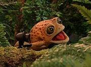 Big Old Bullfrog.jpg