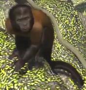 Black-capuchin-zootycoon3
