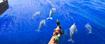 Moana Dolphins