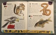 Pet Dictionary (5)