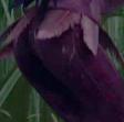 Vidia's Butt