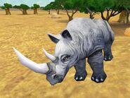 Zt2-blackrhinoceros