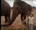 BTJG Elephant