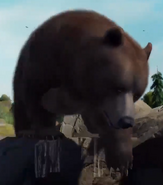 Himalayan-brown-bear-zootycoon3