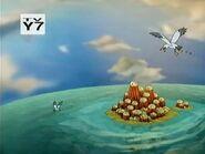 KND Seagulls