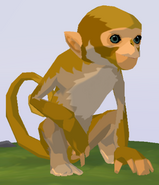 Rhesus Macaque WOZ