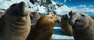 Seal, Southern Elephant (Happy Feet Two)