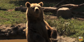 Six Flags Safari Grizzly Bear